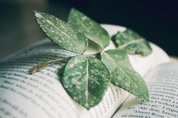 Feuilles vertes dans un livre