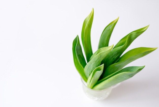 Feuilles vertes dans une tasse