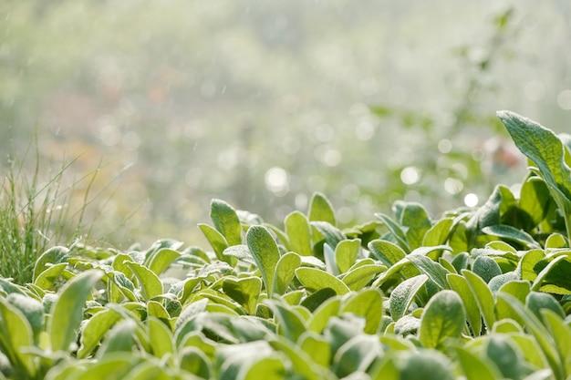 Feuilles vertes de diverses plantes poussant à l'intérieur d'une grande serre contemporaine pendant le processus d'arrosage à l'aide d'un système d'irrigation