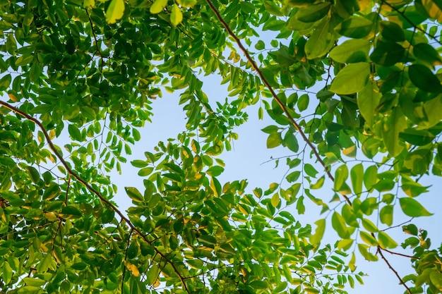 Feuilles vertes du bas vers le ciel
