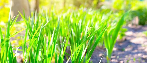 Feuilles vertes à l'extérieur dans la cour. fond rustique naturel et texture naturelle. les plantes au soleil s'allument à l'extérieur.