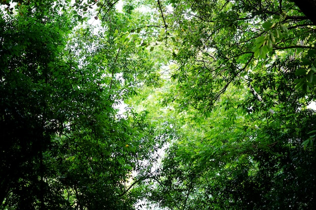 Feuilles vertes fertiles et arbres