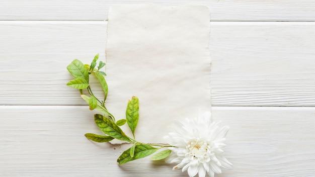 Feuilles vertes et fleur sur papier