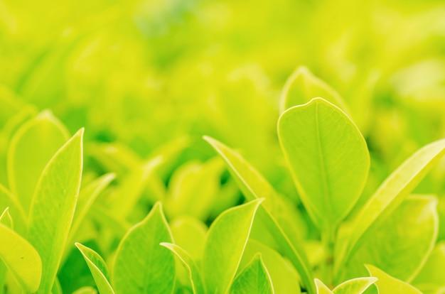 Feuilles vertes floues sur fond flou
