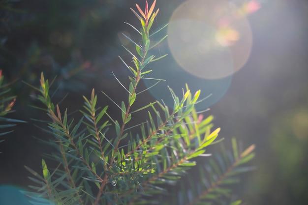 Feuilles vertes fond arbre top avec nature flare fond d'hiver beaufiful et réchauffement