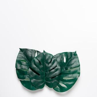 Feuilles vertes sur fond blanc avec espace de copie