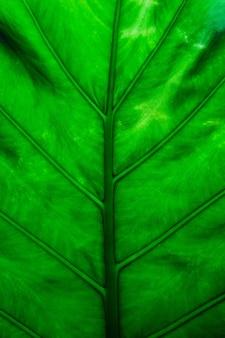 Feuilles vertes fond la couleur des feuilles vertes est sombre le matin.