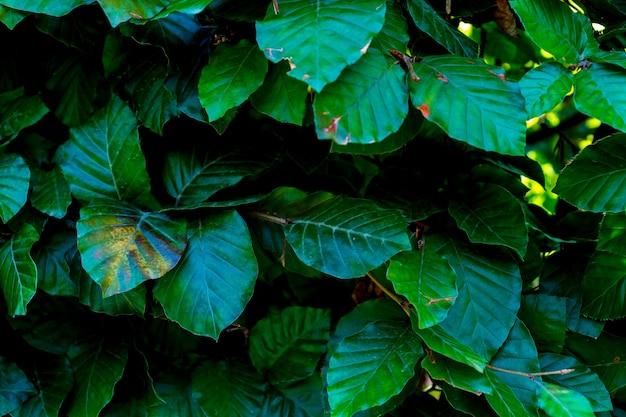 Feuilles vertes de fond, fond naturel et papier peint