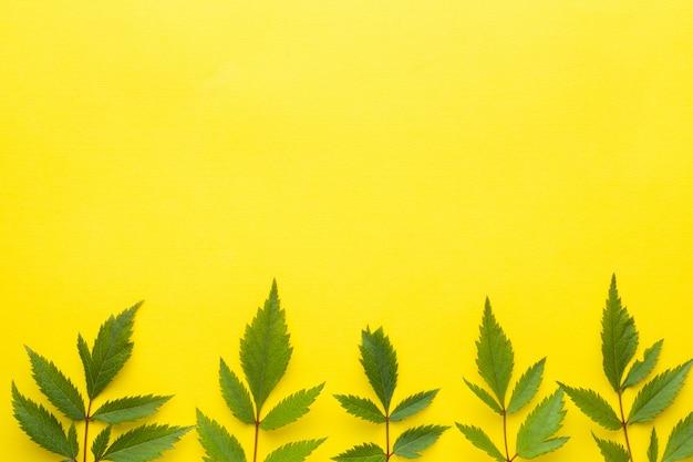 Feuilles vertes sur fond jaune. concept de l'été.
