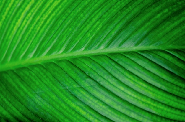 Feuilles vertes, fond à motifs, flou