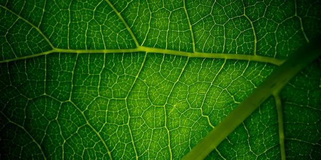 Feuilles vertes fond naturel, texture de feuille, feuilles
