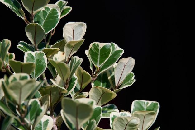 Les feuilles vertes sur fond noir