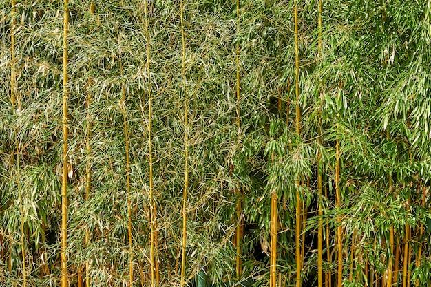 Feuilles vertes avec fond de texture de tiges jaunes