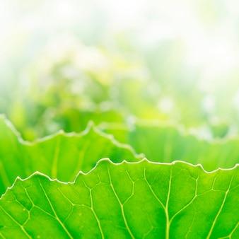 Les feuilles vertes fond