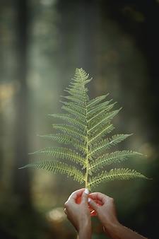 Feuilles vertes de fougère à la main sur la forêt d'arrière-plan flou
