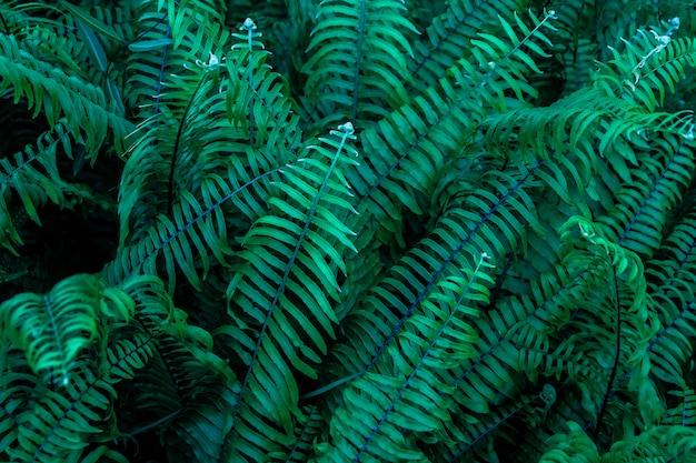 Feuilles vertes fougères contre avec fond noir