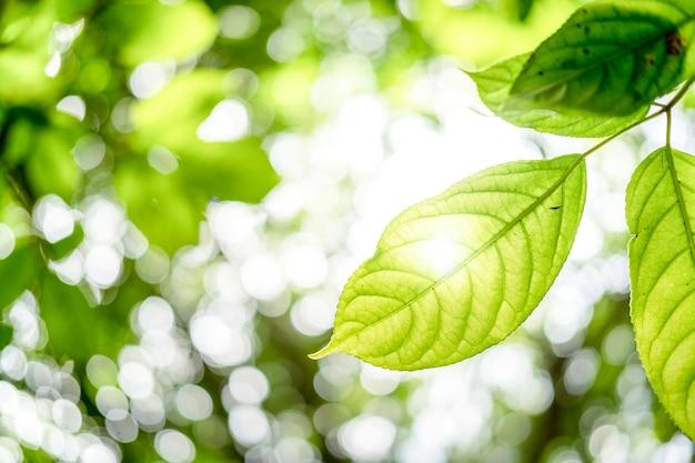 Feuilles vertes fraîches dans une forêt encadrant le soleil au milieu et formant des rayons de lumière
