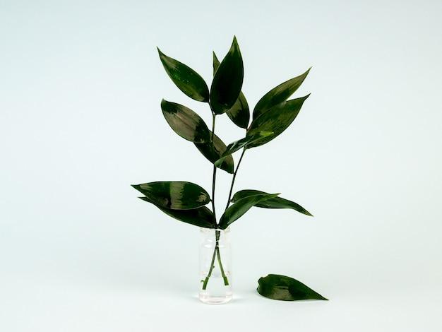 Feuilles vertes fraîches dans un vase sur bleu