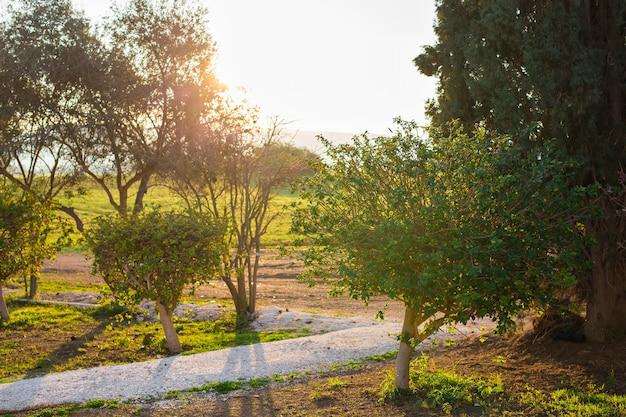Feuilles vertes fraîches sur la nature encadrant le soleil au milieu et formant des rayons de lumière.