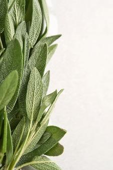 Feuilles vertes fraîches de sauge. fond de texture abstraite herbe sauge. notions naturelles. mise au point douce et sélective. texture. maquette.