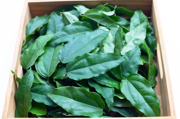 Feuilles vertes fraîches de tiliacora triandra dans une boîte en bois