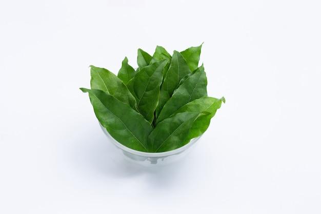 Feuilles vertes fraîches de tiliacora triandra dans un bol en verre