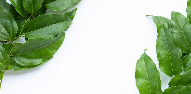Feuilles vertes fraîches de tiliacora triandra