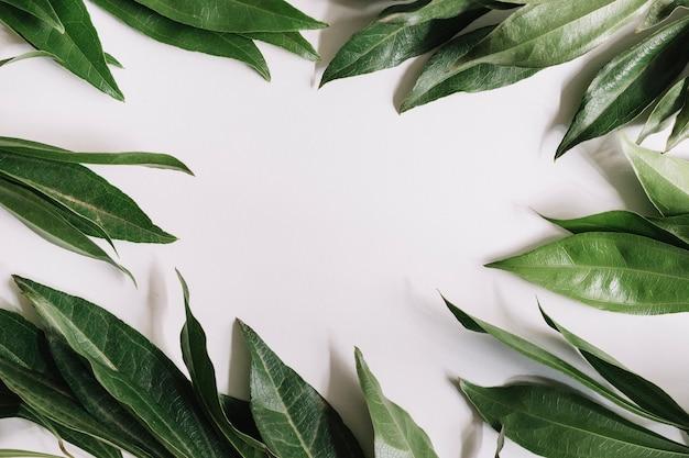 Feuilles vertes frontières sur fond blanc
