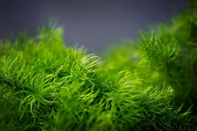Feuilles vertes. gros plan et mise au point sélective de petite fougère devant le mur gris
