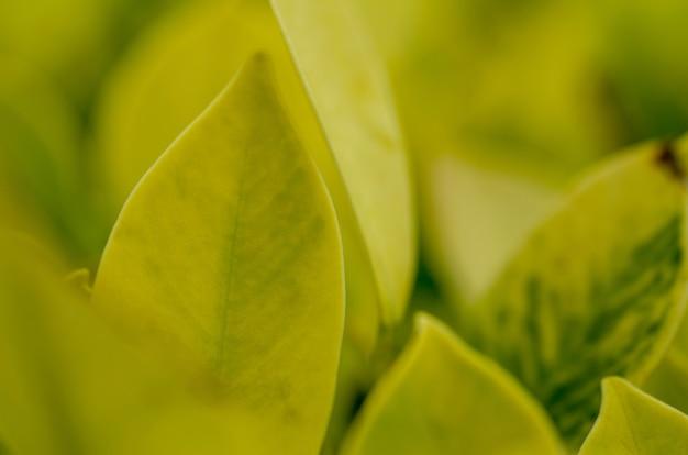 Feuilles vertes, jaune clair avec un arrière-plan flou.