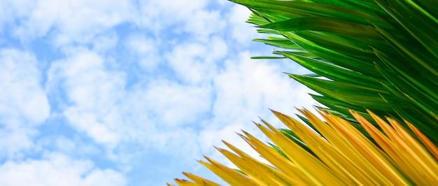 Feuilles vertes et jaunes sur fond de ciel bleu.