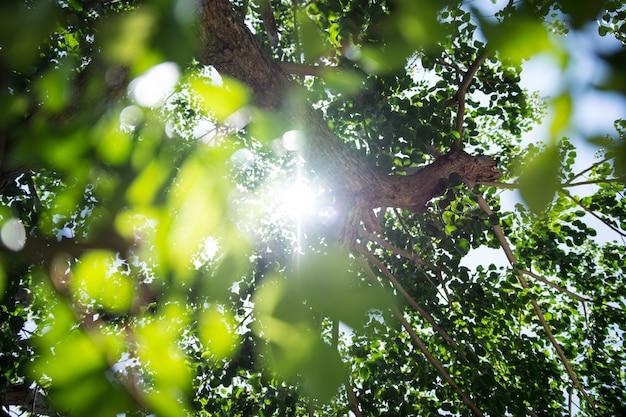 Feuilles vertes avec la lumière du soleil à travers