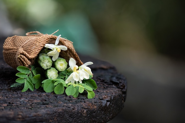 Feuilles vertes de moringa, fruits et fleurs sur la nature.