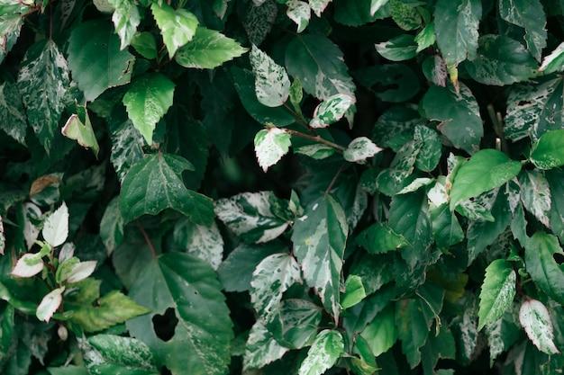 Feuilles vertes nature été et printemps copie espace fond.