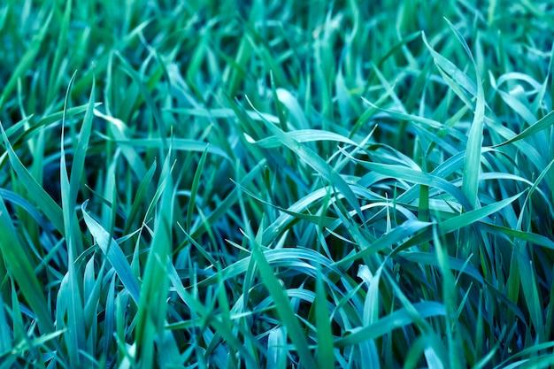 Feuilles vertes naturelles dans le jardin de printemps, feuilles d'été naturelles de la plante, à utiliser comme arrière-plan d'été ou arrière-plan respectueux de l'environnement.