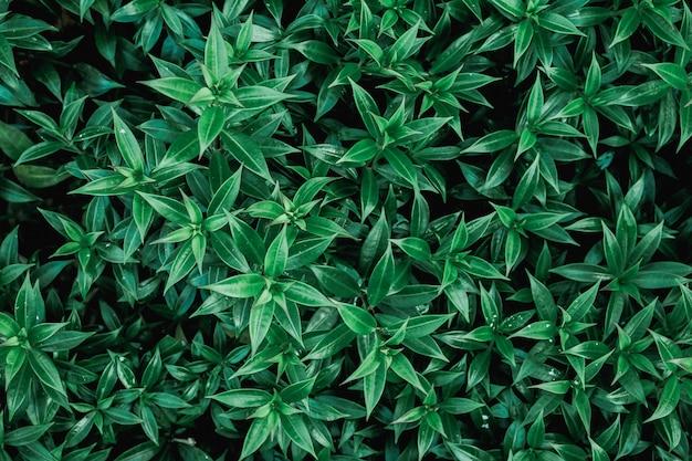 Feuilles vertes naturelles, vue de dessus