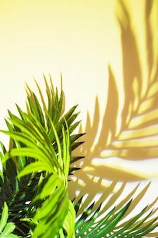 Feuilles vertes ombre sur fond au soleil
