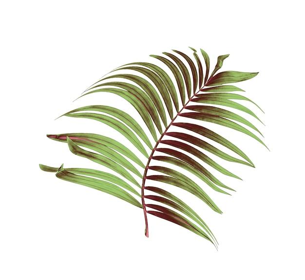 Feuilles vertes de palmier sur fond blanc