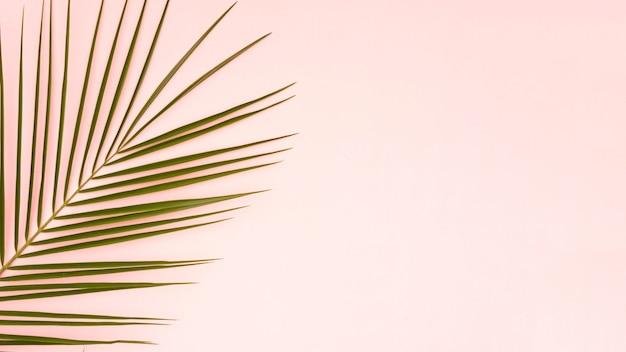 Feuilles vertes de palmier avec fond d'espace copie rose