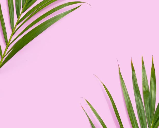 Feuilles vertes de palmier sur fond rose.