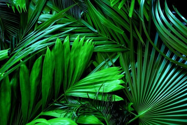 Feuilles vertes de palmier ou noix de coco sur fond de tons sombres ou motifs de forêt de pins tropicaux à feuilles vertes