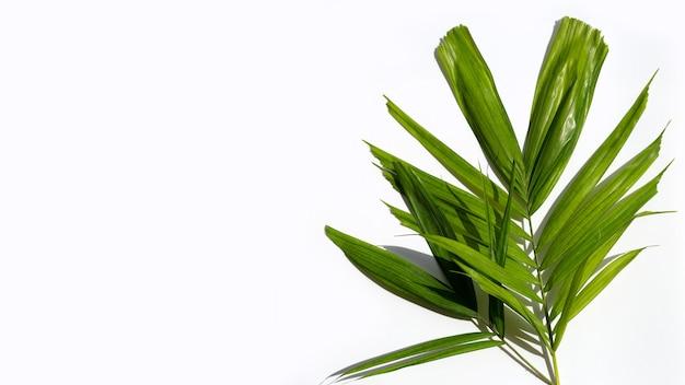 Feuilles vertes de palmier sur une surface blanche