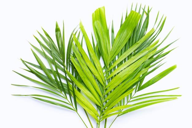 Feuilles vertes de palmier sur une surface blanche.