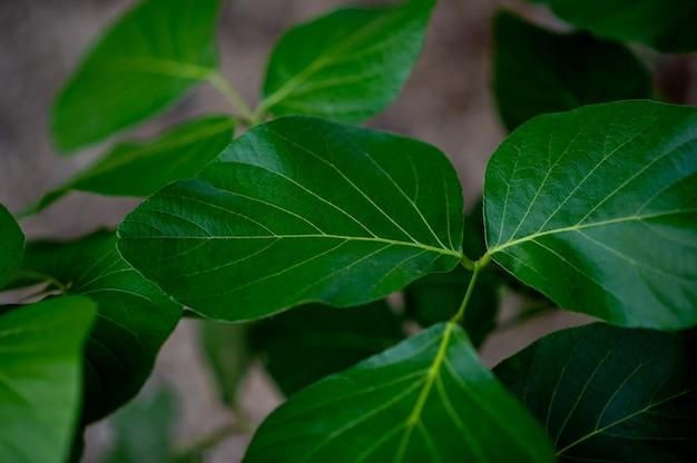 Feuilles vertes, photos de feuilles vertes riches en zones naturelles concept de l'amour de la nature