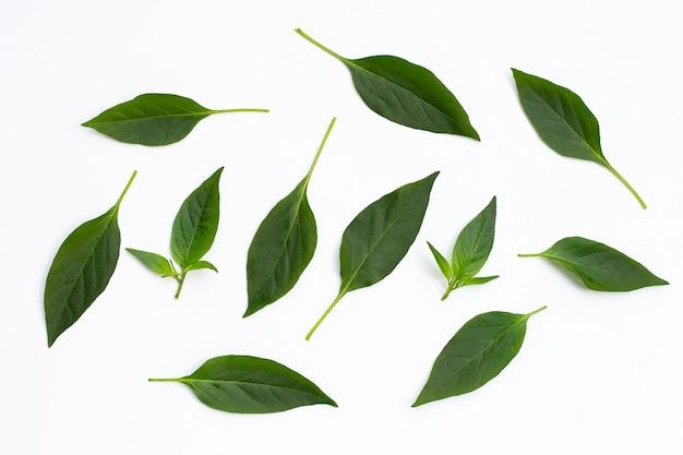Feuilles vertes de piments isolés sur blanc