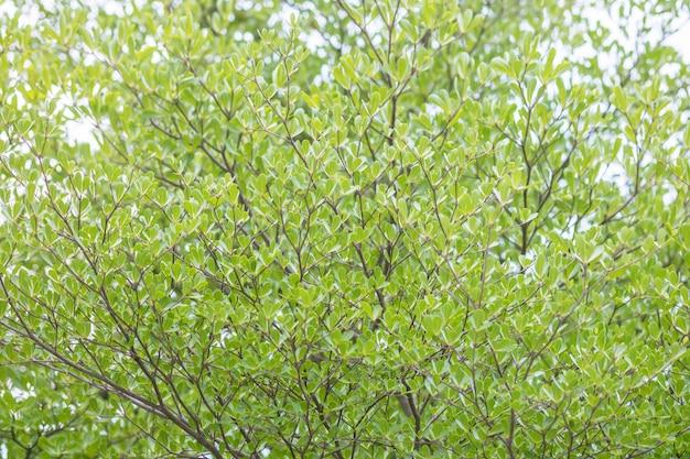 Feuilles vertes de surface sur fond texturé arbre
