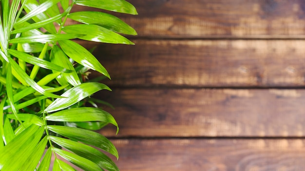 Feuilles vertes et table en bois