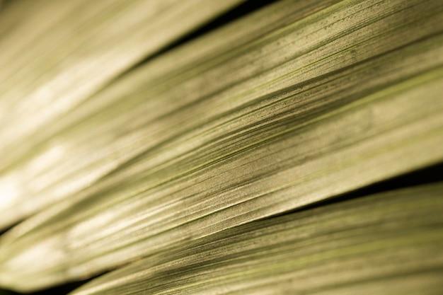 Feuilles vertes texture fond organique