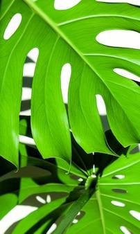Feuilles vertes de texture tropicale blanche différente