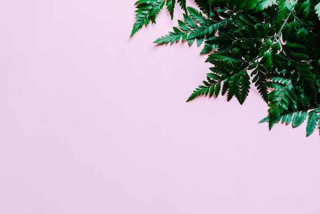 Feuilles vertes tropicales sur la couleur